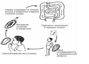 постоянные паразиты человека среди клещей