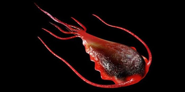 средства от лямблий и других паразитов