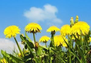 трава от глистов и паразитов